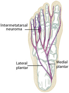 Nerve of the foot
